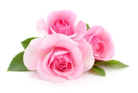 Drie mooie roze rozen op een witte achtergrond.