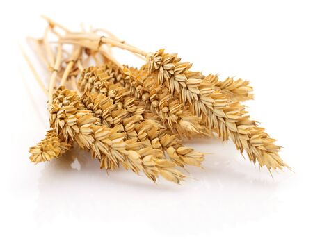 Ears of wheat on a white