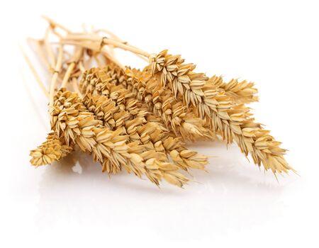 Weizenähren auf einem Weiß