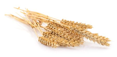 Ears of wheat on a white Banque d'images
