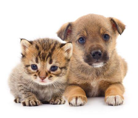 Bébé chiot et chaton isolé sur blanc Banque d'images