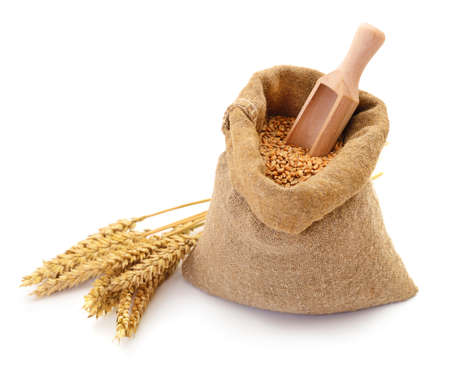 Wheat grains in a sack and ears. Stockfoto