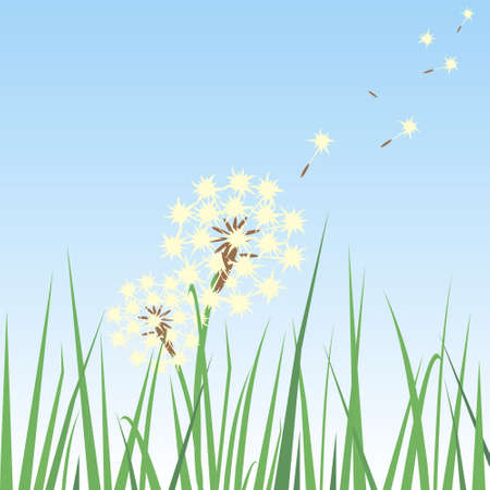Dandelion Seeds In The Breeze and being carried over a grass Vector
