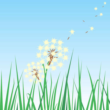 gentle dream vacation: Dandelion Seeds In The Breeze and being carried over a grass