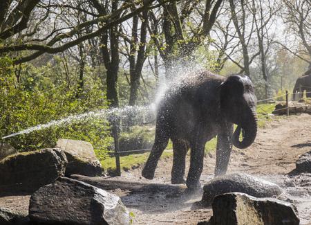 Olifant water spray - douche