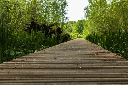 Close up wooden flooring, bridge in park with green trees background, copy space Фото со стока