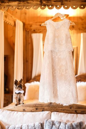 Wedding dress hanging on a hanger and a cute dog