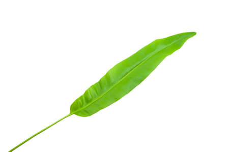 Leaves on a white background Stock Photo