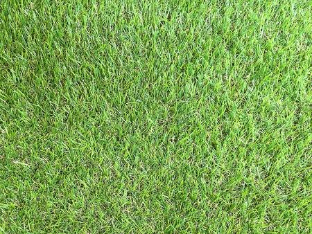 Background striped green grass