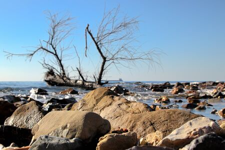 View of the ocean in Lazio - Italy with stones and an old tree trunk in the foreground