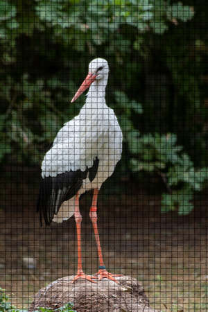 Close up of a stork in an animal park in Germany in mosaic style