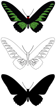 vector butterfly Vector