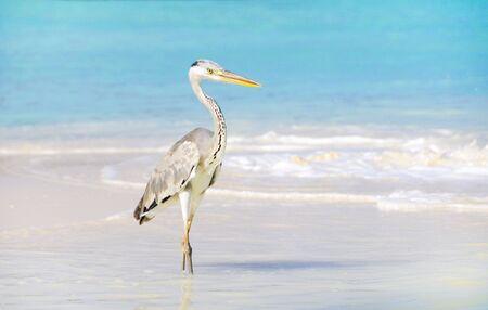 seabird: seabird at beach of maldives Stock Photo