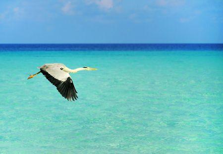 seabird: Picture of  seabird at beach of maldives. Stock Photo