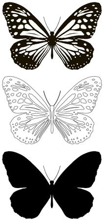 venation: butterfly