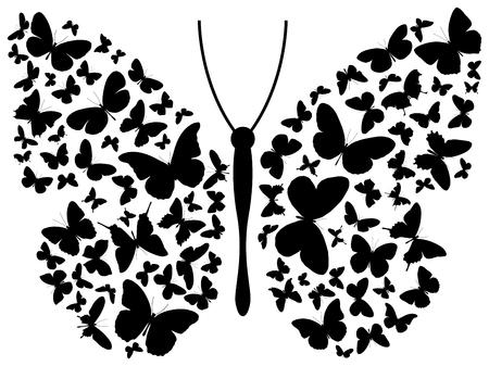 farfalla nera: Illustrazione della farfalla  Vettoriali