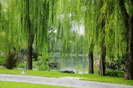 willows: Picture the scene of willow and path at bank of pond
