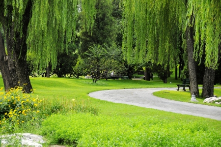 sideway: Picture the scene of willow and path at bank of pond