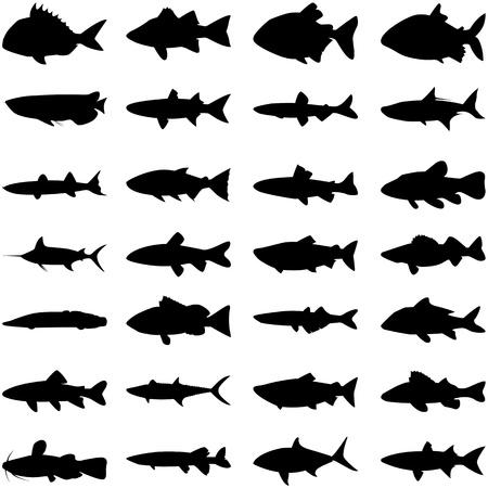 peces de agua salada: Ilustraci�n vectorial de diferentes tipos de peces silueta. Vectores