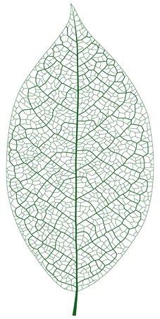 잎 정맥의 계층화 된 그림