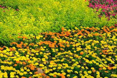 grassplot: Picture of garden with different flower
