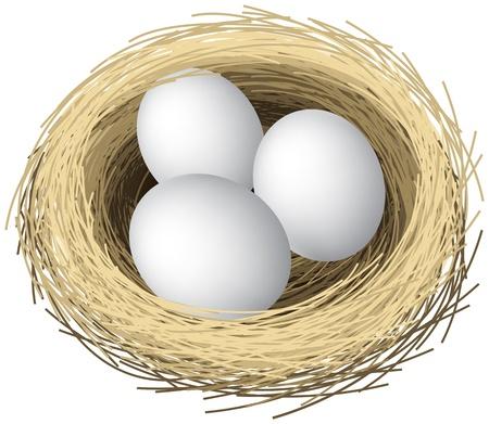 nido de pajaros: Ilustración en capas de huevos de nidos Vectores