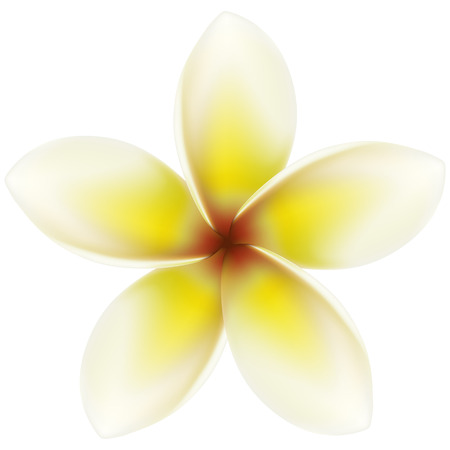 yellow flower: Layered vector illustration of Plumeria. Illustration