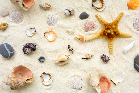 Seashells on sand. Sea summer vacation background. Top vew. Copy space