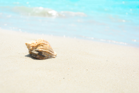 Shells on sandy beach. Tropical background. Travel and relax concept Stockfoto
