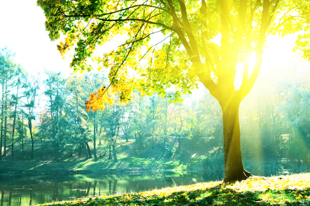 Autumn trees with multicolored leaves with view to the lake. Sunlight from maple foliage in sunny day. Stockfoto