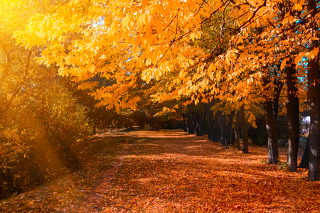 Autumn forest with footpath leading into the scene. Sunlight rays through the autumn tree branches. Copy space Stockfoto