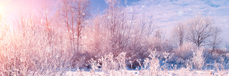 Banner 3:1. Winter landscape. Winter road and trees covered with snow. Sky and sunlight through the frozen tree branches. Copy space. Soft focus Stock Photo
