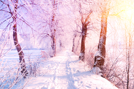 Winter landscape. Winter road and trees covered with snow. Sky and sunlight through the frozen tree branches. Copy space. Soft focus