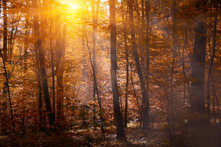 Autumn treetops in fall forest with mist. Sky and sunlight through the autumn tree branches. Autumn background. Copy space. Soft focus