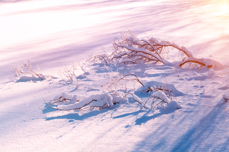 Winter landscape. Winter trees covered with snow lying on graund. Sky and sunlight through the frozen tree branches. Copy space. Soft focus