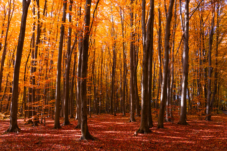 Autumn forest with footpath leading into the scene. Autumn background. Copy space. Soft focus
