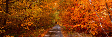 Banner 3:1. Autumn forest with footpath leading into the scene. Autumn background. Copy space. Soft focus Stockfoto