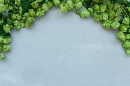 Hop cones border on gray wooden background. Harvesting or brewery concept. Top view. Flat lay.
