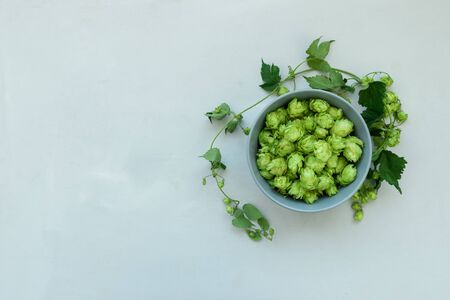 Bowl with hop cones on gray wooden background. Harvesting or brewery concept. Top view. Flat lay.