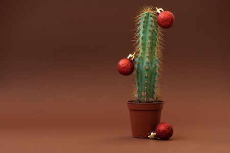 Cactus as Christmas tree with red balls on browm background. Christmas and New Year holidays celebration concept. Front view.