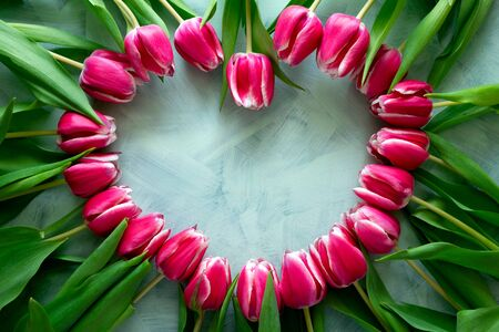 Heart shape frame from fresh pink tulips on turquoise background. Top view. Flat lay. Copy space. Valentines day, mothers day or birthday celebration concept Stok Fotoğraf
