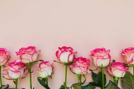 Line from fresh pink roses on pink background. Top view. Flat lay. Copy space. Valentines day, mothers day or birthday celebration concept