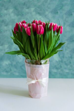 Bouquet of pink tulips in vase stay on white and turquoise background. Valentines day or Mothers day celebration concept. Front view. Copy space