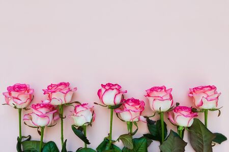 Close-up  border from fresh pink roses on pink background. Top view. Flat lay. Copy space. Valentines day, mothers day or birthday celebration concept Stok Fotoğraf