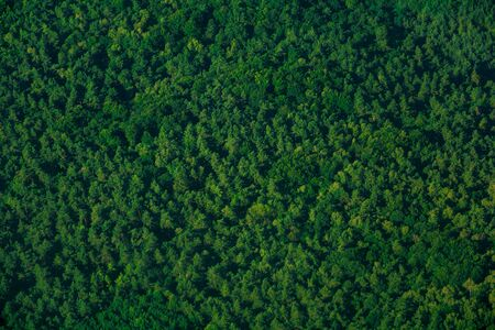 Green aerial top view forest. Evergreen spruce pattern Stok Fotoğraf