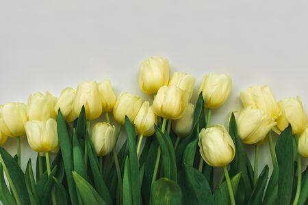 Yellow tulips on white background. Valentines day, mothers day, 8 March or birthday celebration concept Stok Fotoğraf