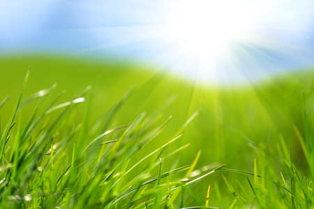 Fresh green grass against blue sky and sun beams. Abstract spring background.