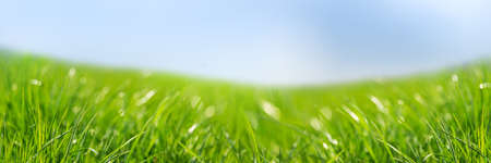 Banner 3: 1. Fresh green grass against blue sky. Abstract spring background.