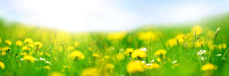 Banner 3: 1. Field with yellow dandelions against blue sky and sun beams. Spring background. Soft focus