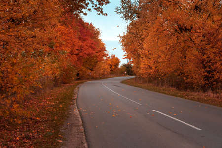 Empty asphalt road in autumn fall forest. Autumnal background. Selective focus